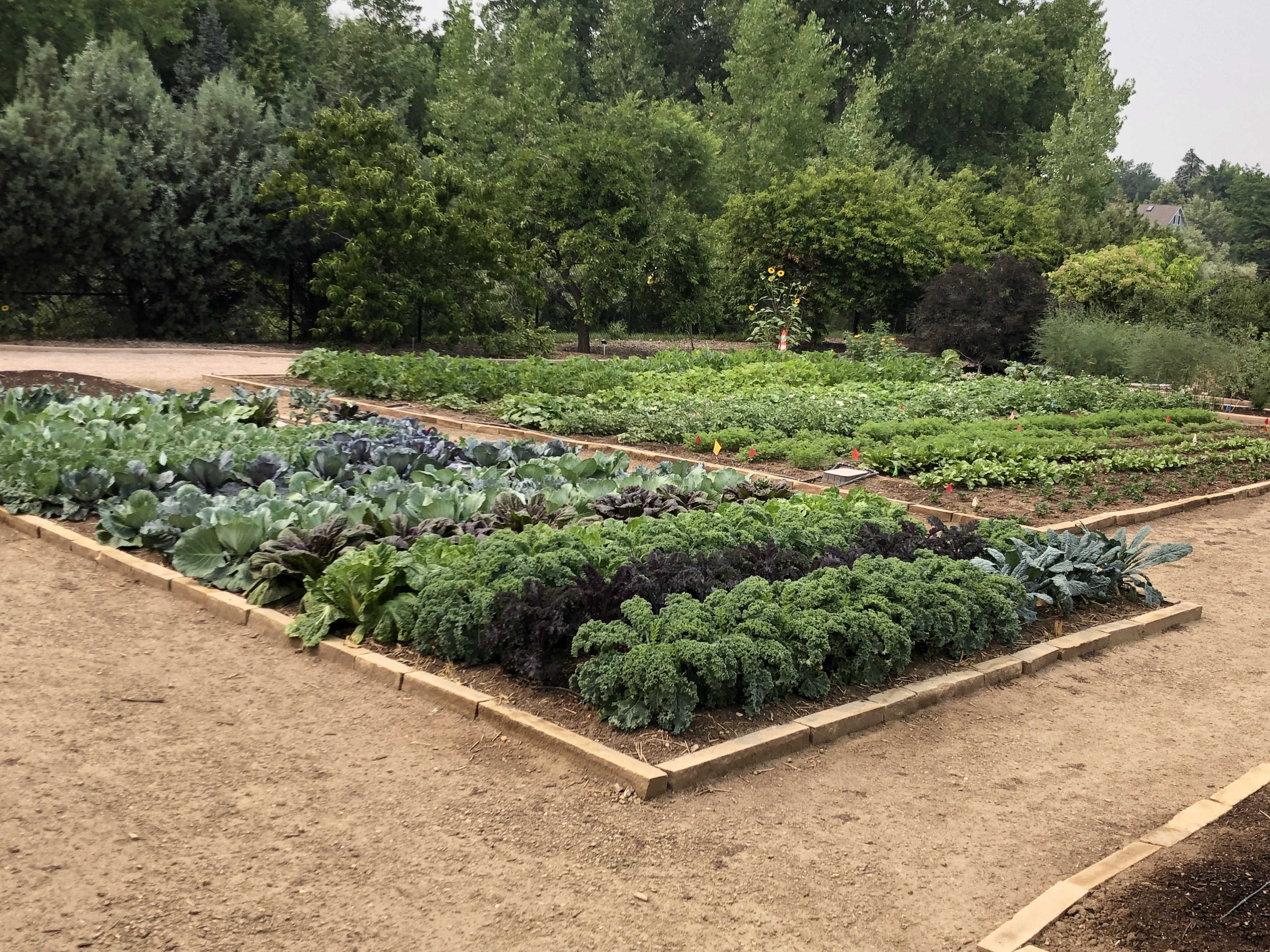 Soil health is the foundation for growing great vegetables. (NDSU photo)