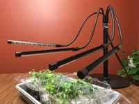 Artificial light needs to mimic sunlight to grow sturdy seedlings. (NDSU photo