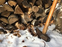 Most hardwood tree species can provide about 8,600 British thermal units of heat per pound. (NDSU photo)