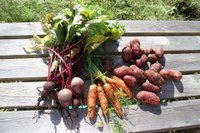 Root vegetables provide a delicious side dish for dinner and peelings for a compost bin. (Photo courtesy of Pixabay)