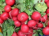 The peppery flavor of radishes make them a tasty addition to salads or relish trays. (Photo courtesy of RoganJosh, Morguefile)