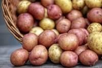 Potatoes provide several important nutrients, including potassium, complex carbohydrates, vitamin C and fiber. (Photo courtesy of Pixabay)