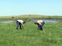 Extension area livestock specialist Karl Hoppe, right, and Andy Gross, Natural Resources Conservation Service soil conservation technician, collect grass samples for a livestock forage nutrient study.
