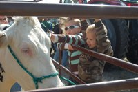 Kids get acquainted with a cow at the NDSU Animal Sciences Department's 2013 Moos, Ewes and More event.