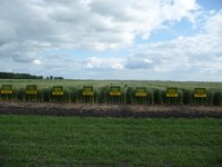 NDSU spring wheat varieties are popular with growers. (NDSU photo)
