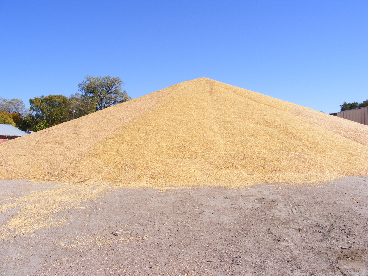 Rain can pose significant problems for uncovered grain piles. (NDSU photo)