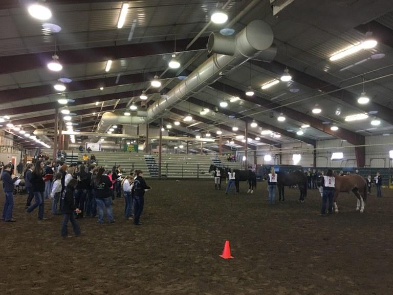 North Dakota 4-H'ers compete in the state horse judging contest at NDSU. (NDSU photo)