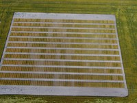 An aerial view of a wheat variety plot shows the multitude of varieties being tested. (NDSU Photo)