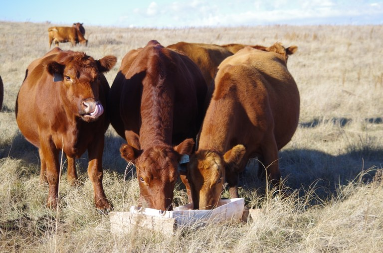 Producers must have a written order from their veterinarian before buying antibiotics intended for use in livestock feed. (NDSU photo)