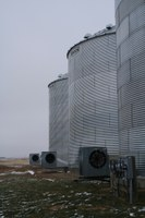 Operating aeration fans during cool mornings can cool grain in the upper portion of the grain bin. (NDSU photo)