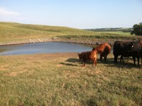 Test the quality of the water in ponds and other water sources before turning livestock out to pasture this year, (NDSU photo)