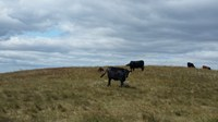 Evaluate pasture rental rates before renewing your rental contract. (NDSU photo)