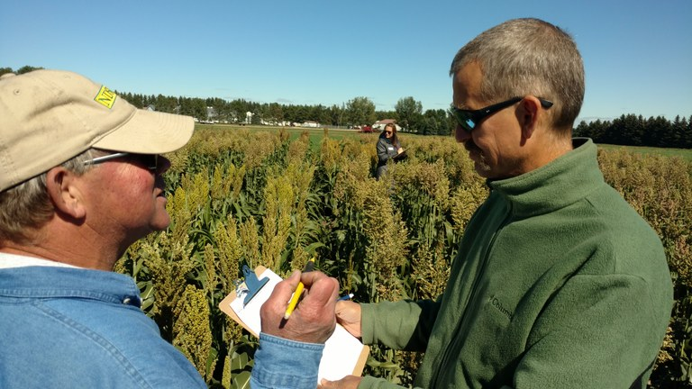 Steve Zwinger, a research specialist at NDSU's Carrington Research Extension Center, left, and Frank Kutka of the Northern Plains Sustainable Ag Society, evaluate plants for seed production in the Farmer-Breeder Project. (NDSU photo)