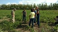 Visitors tour a 2016 SARE project in North Dakota. (NDSU photo)