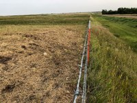 The forage in this pasture has been cropped closely to the ground. (NDSU photo)