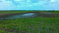 Poor drainage can cause problems for agricultural producers. (NDSU photo)