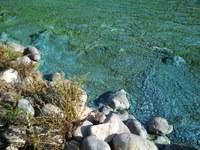 Big Mallard Marsh in North Dakota's Stutsman County has a well-developed algae bloom. (Photo courtesy of the North Dakota Health Department)