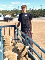 Dillon Stroh of Tappen, N.D., a 2016 recipient of a starter flock, picks up his ewes. (NDSU photo)