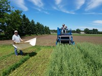 Steve Zwinger, organic research specialist at the Carrington Research Extention Center (on the tractor) and Steve Schaubert, an agronomy technician at the center, are harvesting an organic oat/pea intercropping trial plot. (NDSU photo)