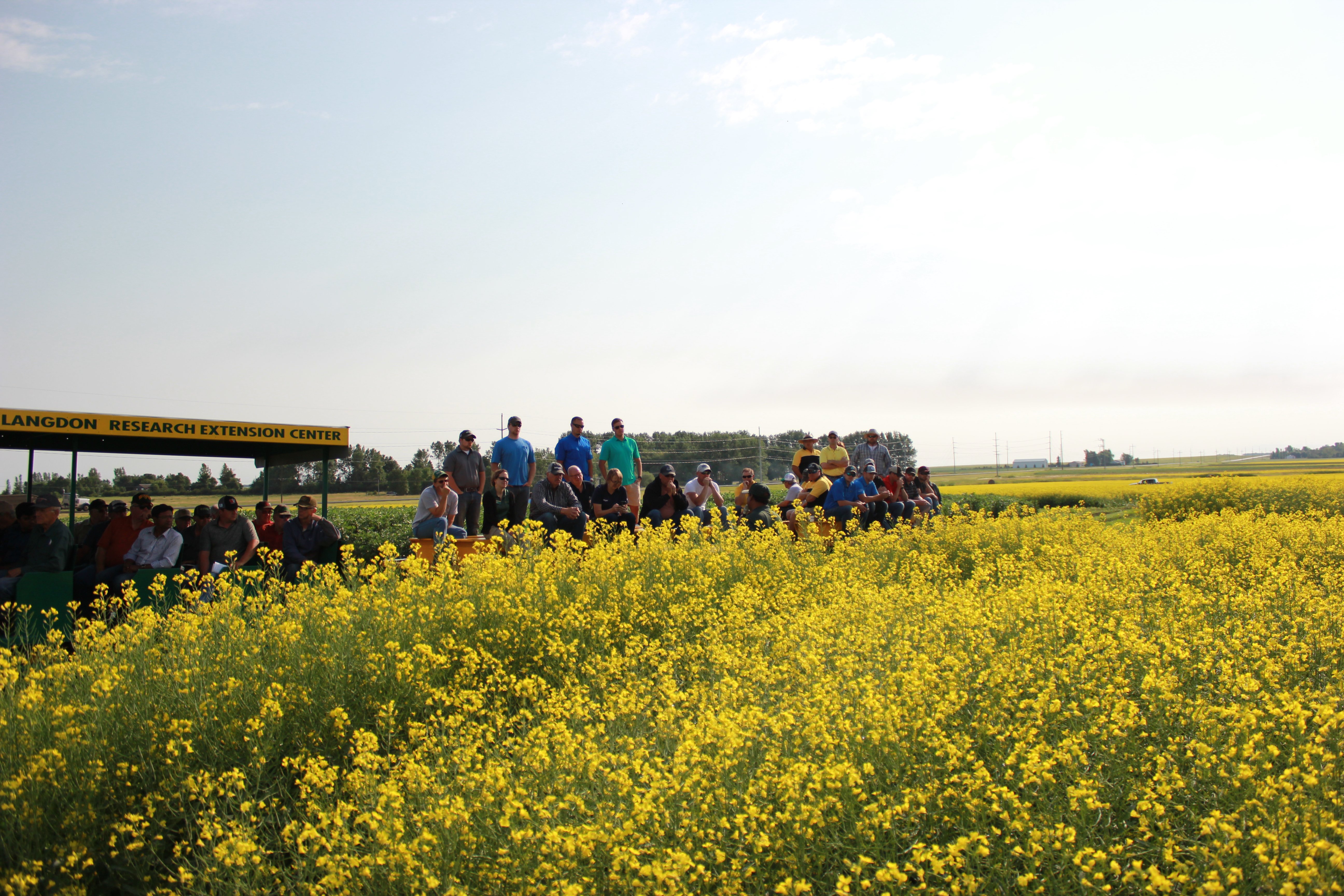 Visitors get a look at canola during a field tour at NDSU's Langdon Research Extension Center. (NDSU photo)