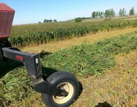 Millet, an annual, warm-season crop, is being harvested. (NDSU photo)
