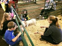 Kids have a chance to pet baby pigs at Moos, Ewes and More, the event the NDSU Animal Sciences Department hosts annually. (NDSU photo)
