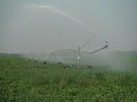 A center pivot irrigation system provides water to a sugar beet field. (NDSU photo)