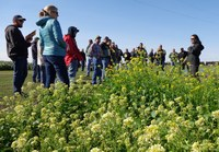 Visitors learn about NDSU cover crop research. (NDSU photo)