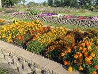 Walking tours will be part of the gardening event at NDSU's Horticulture Research and Demonstration Gardens on Sept. 5. (NDSU photo)