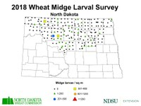 2018 Wheat Midge Larval Survey - Midge Per Square Meter