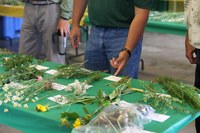 Visitors look at weeds during a pest clinic at the North Central Research Extension Center. (NDSU photo)