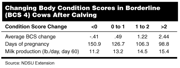 Changing Body Condition Scores in Borderline (BCS 4) Cows After Calving