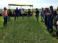 Crop advisers and farmers get in-the-field experience at NDSU Extension Crop Management Field School. (NDSU Photo)
