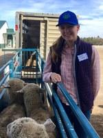Faith Norby of Killdeer, N.D., picks up her Starter Flock Program sheep. (NDSU photo)