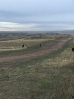 This is the unsuccessful reclamation of a grass seeding following pipeline installation. (NDSU photo)