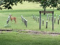 A fawn checks out the living weed display at the Carrington Research Extension Center. (NDSU photo)