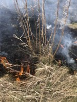 The scientists will assess how a common management practice compares with treatments that use fire and/or grazing to promote more variable habitats. (NDSU photo)