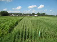 Scientists conduct research on organic production at the Carrington Research Extension Center. (NDSU photo)