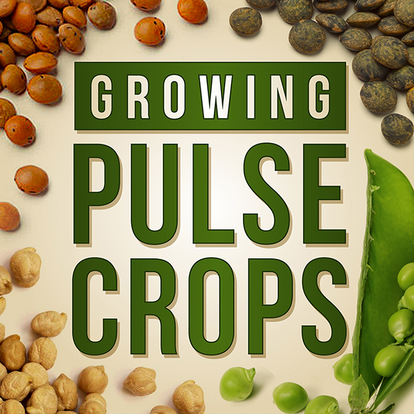 Growing Pulse Crops Podcast
