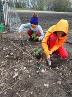 4-H'ers plant a garden as part of their effort to incorporate nutrition, fitness and health activities into their club meetings in 2019-2020. (NDSU photo)