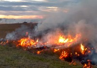 Wildfires prior to the growing season should have no impact on the plant community in terms of species change on rangelands, plant density on grass hay stands or forage production of new growth. (NDSU photo)