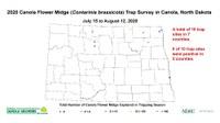 Six of 10 canola flower midge trap sites were positive in the 2020 survey. (NDSU photo)