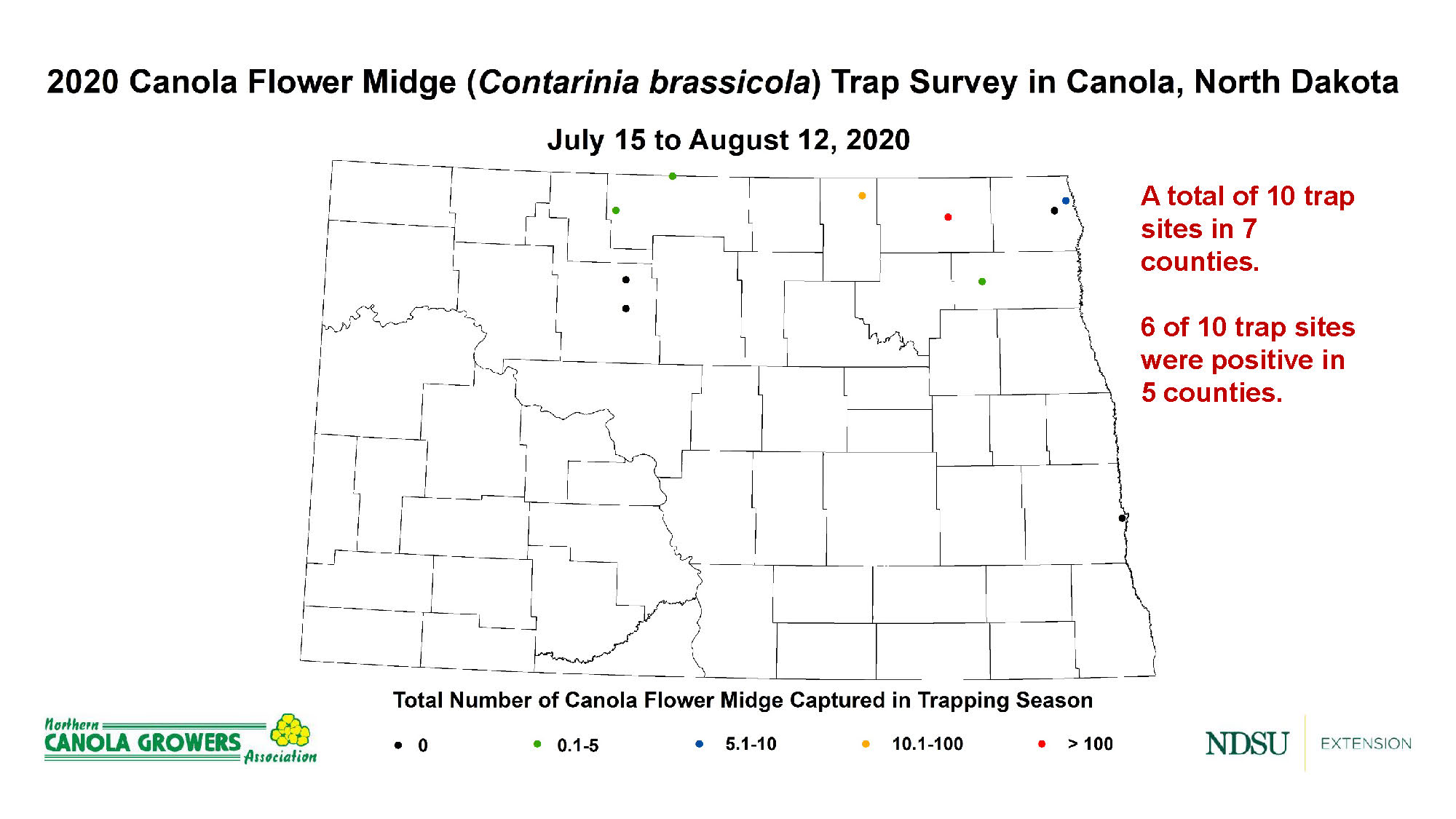Six of 10 canola flower midge trap sites were positive in the 2020 survey. (NDSU photo)