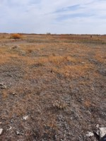 This is a drought-stressed pasture. (NDSU photo)