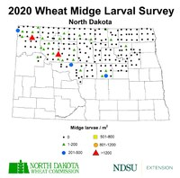 2020 Wheat Midge Survey Map (NDSU Photo)