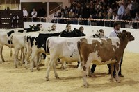 The show features showmanship classes of beef, dairy, sheep and swine as well as ham curing and public speaking contests.