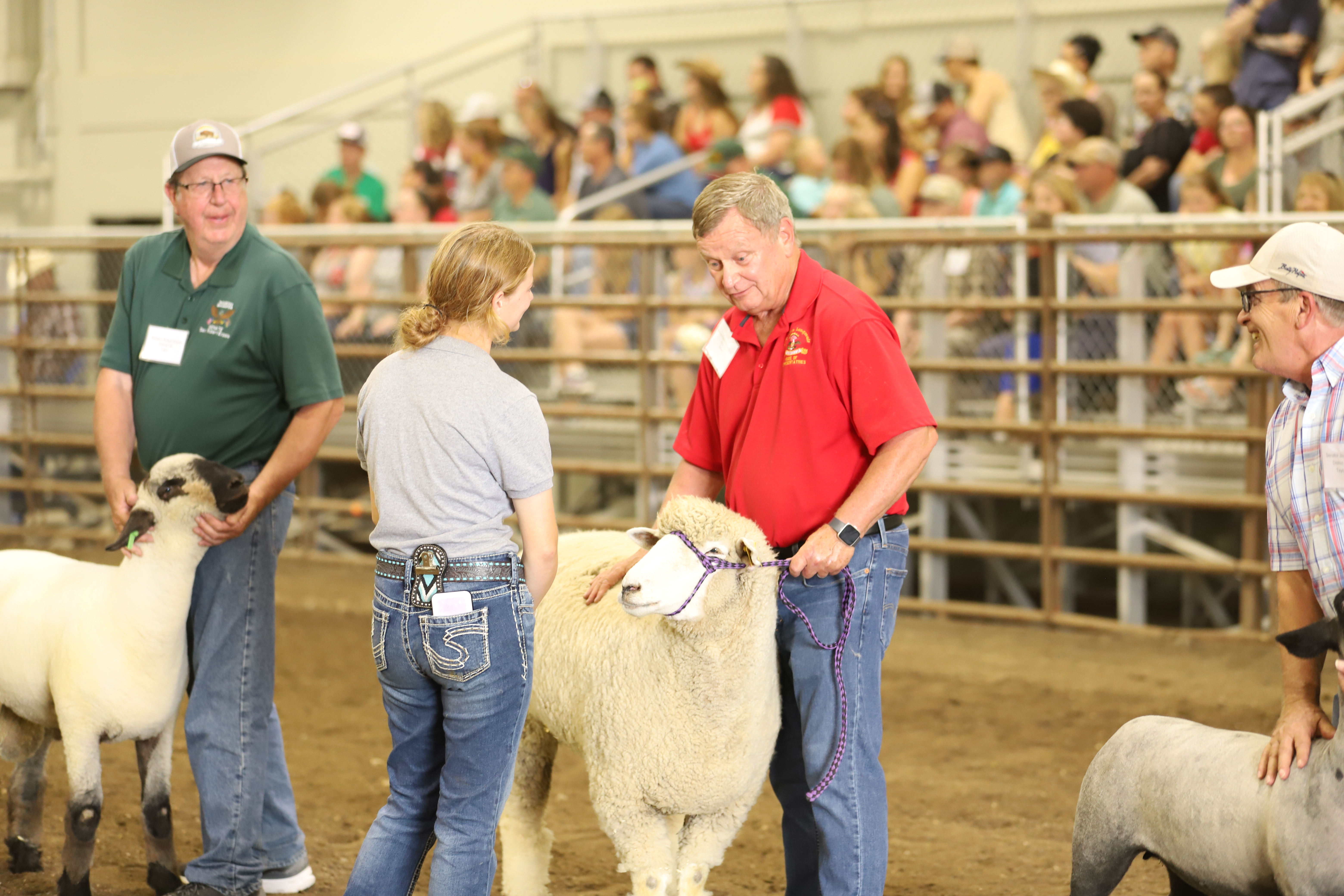 A 4-H'er judges state leaders in the sheep competition during the North Dakota Leaders 4-H Showmanship Contest at the North Dakota State Fair in Minot. (NDSU photo)
