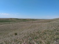 This Ward County pasture is in North Dakota's D4 (exceptional) drought area. (NDSU photo)