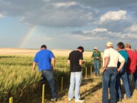 Visitors learn about crop production during a field tour at NDSU's Hettinger Research Extension Center. (NDSU photo)