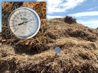 A manure pile from a dry lot is undergoing thermophilic decomposition, with the internal temperature between 130 and 150 degrees. (NDSU photo).